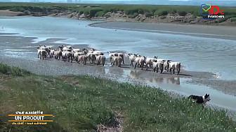TVdeschefs - L'agneau de Pré-Salé : une viande d'exception !