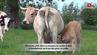 'Instants Gourmands by Jackie Masse ' qui vous entraîne chez Alexandre Loye, agriculteur-éleveur en Baie de Somme @TVdeschefs @Smartrezo
